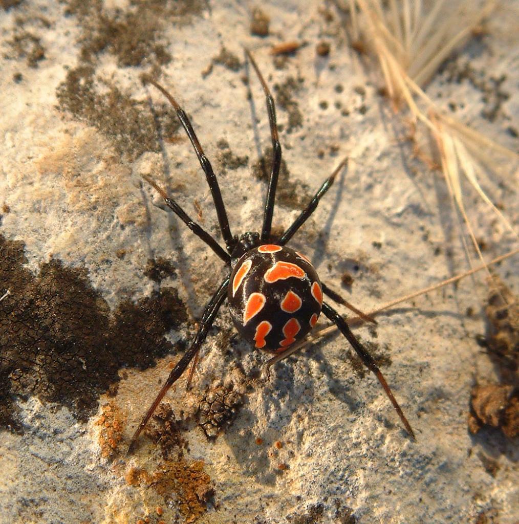 Neue Spinne Deutschland