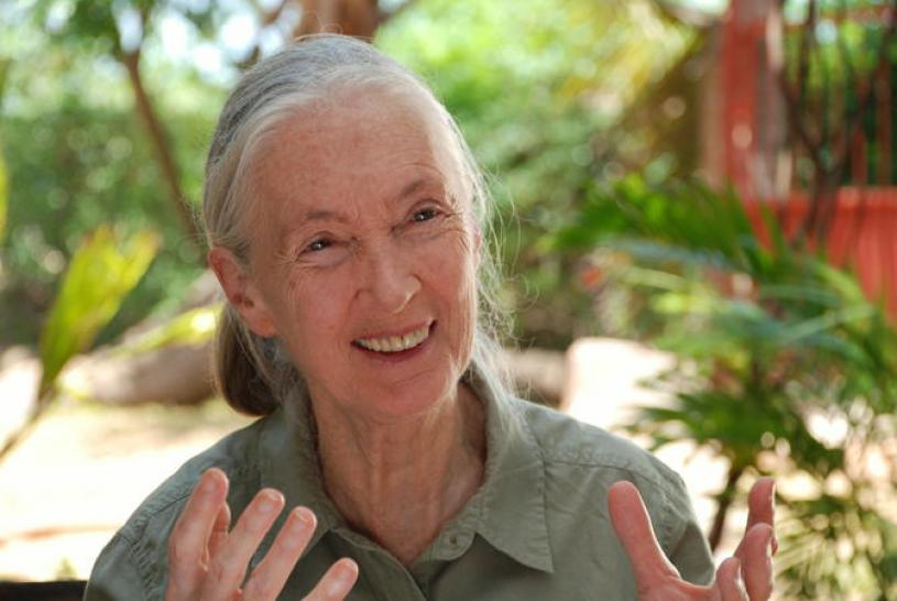 Jane's Journey - Die Lebensreise der Jane Goodall (1)