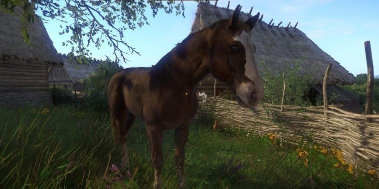 Plötze Pferd
