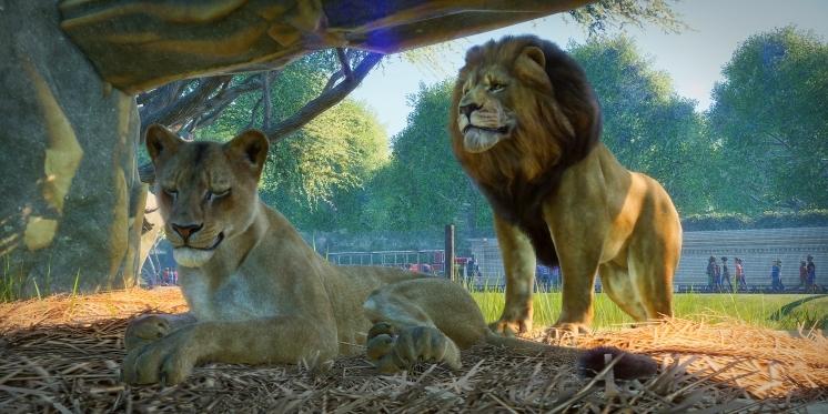 Zoo Aufbauspiel Pc